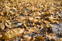 Decaying autumn leaves on asphalt. Close up low angle view of brown decaying autumn leaves on asphalt symbolising life cycles in nature and the changing season stock photos