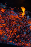 Decaying coals Stock Image