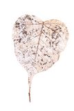 Heart shaped leaf Stock Photography