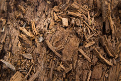 Decaying log background Stock Photography