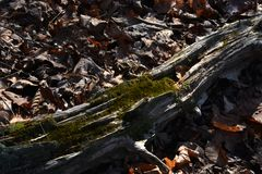 Rotting log with moss Stock Image