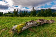 Decaying log on the grassy meadow near the forest. Wonderful landscape in early autumn. Borzhava mountain ridge in the distance under the cloudy sky Royalty Free Stock Photo