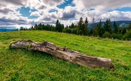 Decaying log on the grassy meadow near the forest. Wonderful landscape in early autumn. Borzhava mountain ridge in the distance under the cloudy sky Royalty Free Stock Image