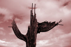 Decaying Saguaro Cactus Ribs with Red Sky Stock Photo