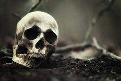 Free Decaying Skull In The Soil Stock Photo - 176472440