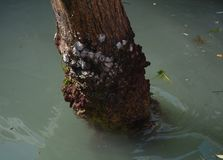 Decaying tree trunk and dirty water in Venice Royalty Free Stock Images