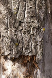 Decaying tree trunk Royalty Free Stock Photography