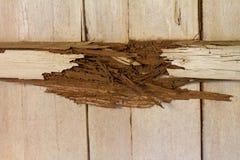 Decaying wood beams Royalty Free Stock Photo