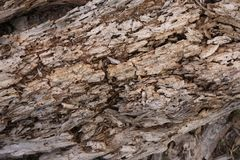 Decaying wood trunk with termite damage. Wooden plank siding of a house under the roof is damaged and compromised structurally with gaps and holes left behind by royalty free stock photos