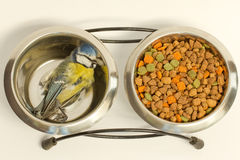 A deceased blue tit. In a cat's food bowl Royalty Free Stock Images