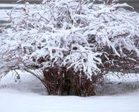 December 2009 Fotografering för Bildbyråer