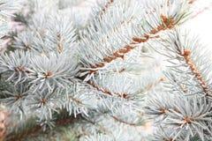 december för 2010 28th bakgrundsjul som detalj isoleras över foto tagen treewhite Royaltyfri Foto