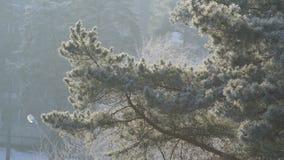 December frost Royaltyfria Bilder