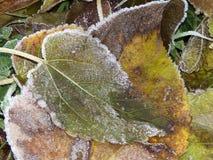 December last leaves fallen down stock image
