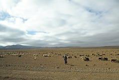 December 13, 2017, nära Tazenakht, Marocko En nomad håller ögonen på över en flock av får arkivfoton
