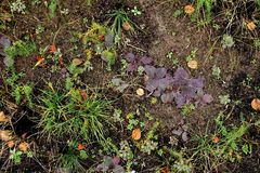 December poor vegetation on the ground. Scarce colorful vegetation of herbs on the ground in November-December Royalty Free Stock Photos