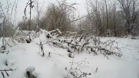 December. Snow and Blizzard. Winter landscape outside the city. December. Snow and Blizzard stock footage
