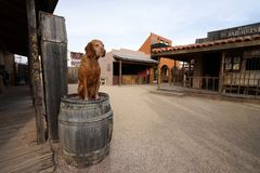 Dog sitting on a barrel. December 9, 2015 Tombstone, Arizona, USA: dog sitting on a barrel in the historic western town popular tourist destination royalty free stock photography