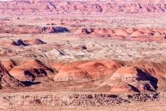 21 december, 2014 - Van angst verstijfd Bos, AZ, de V.S. Stock Afbeelding