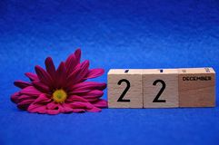 22 December on wooden blocks with a purple daisy. On a blue background stock images