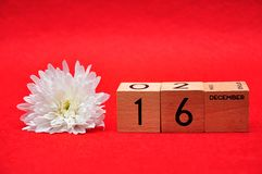 16 December on wooden blocks with a white daisy. On a red background stock photography
