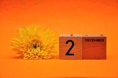 2 December on wooden blocks with a yellow daisy. On an orange background stock photo