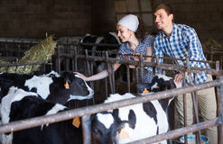 Decent man and woman happily stroking cows. Decent young men and women happily stroking cows on the farm Stock Photography