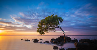 Deception Bay, Queensland. Lone tree in the water at Deception Bay, Queensland Stock Image