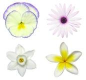 Dechado de la flor Fotos de archivo libres de regalías