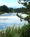 Dechutes rzeka Zdjęcie Royalty Free