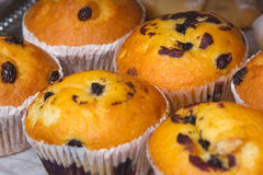 Decicious muffins with raisins Stock Images