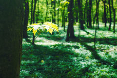 Decidious forest. Nature in spring time Stock Images