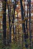 Deciduous autumn in the mountains. The forest is filled with colors. On the ground we walk on carpets of fallen leaves stock photography
