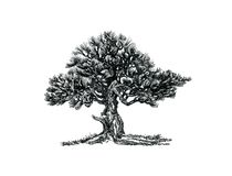 Deciduous bonsai.The natural form, the eastern mystery. Graphic drawing, an illustration of an exotic plant in the style of a bonsai, a black and white symbol Stock Images