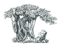 Deciduous bonsai on rock. Black and white drawing. Illustration of a small tree, far-eastern bonsai Royalty Free Stock Photo