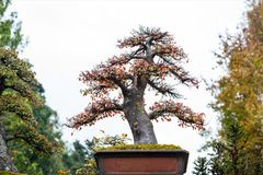 Bonsai trees in the park. Deciduous bonsai trees in the park royalty free stock photo