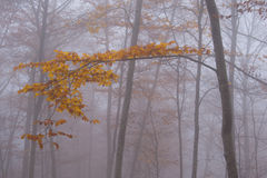 Deciduous branch into the fog. Royalty Free Stock Photo