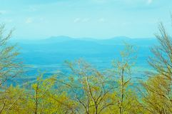Deciduous bukowy las w wiośnie, lasu krajobraz obrazy royalty free