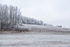 Canadian Winter Mood - Cold Pasture royalty free stock photos