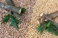 Deciduous and coniferous biomass. Fir, pine, oak, wood, cone, pellets stock image