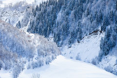 Deciduous and coniferous forest on the snowy Royalty Free Stock Photo