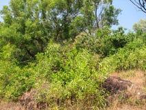 Deciduous and coniferous subtropical forest. Stock Photography