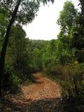 Deciduous and coniferous subtropical forest. Stock Image