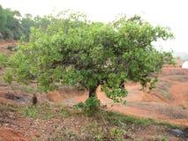 Deciduous and coniferous subtropical forest. Stock Photos