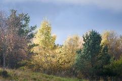 Deciduous and Coniferous trees Stock Photo