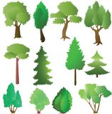 Deciduous and coniferous trees in the summer Royalty Free Stock Images