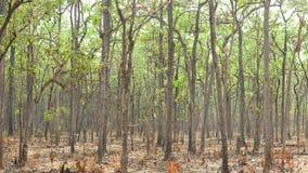 Deciduous Dipterocarp Forest Stock Photos