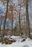Deciduous drzewa las w zimie blisko gubernatora Knowles stanu lasu w Północnym Wisconsin - siekający drewno w przedpolu fotografia royalty free