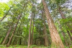 Deciduous drzewa las z zielenią opuszcza w jeżatek gór pustkowia stanu parku w Górnym półwysepie Michigan - spojrzenie zdjęcie stock