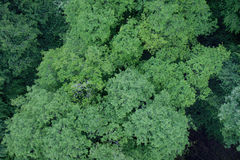 Deciduous forest from above. In the German region of Hunsrück Stock Photography